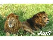【アドベンチャーワールド】ケニア号に乗って動物を間近に感じられます。