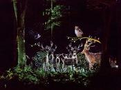■夜の森を歩いて愉しむナイトウォーク「カムイルミナ」/美しい映像が森の中に浮かびあがる(イメージ)