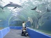 【海望周辺情報】のとじま水族館ホテルより車で約20分。いるかショーや、全国でも数少ないラッコの姿、また日本海側の水族館としては初めてとなるプロジェクションマッピングの常時投影により、海中散歩しているような臨場感をお楽しみ頂けます。