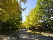 文化施設や歴史的建造物も。四季折々の自然を感じる中島公園