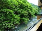 ■景観■四万やまぐち館のロビーからは花緑色に染まる四万川をご覧いただけます。