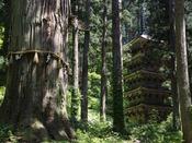 羽黒山三神合祭殿【写真提供:山形県観光物産協会】