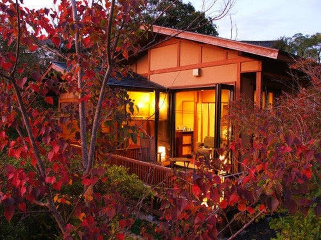 庭木も季節を映し出す写真:南京ハゼ紅葉するお部屋
