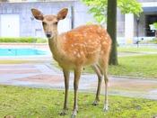 中庭で鹿に会えるかも・・・!