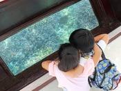 【グラスボート】どこまでも続く広い海の中で過ごす生き物たちの世界を覗いてみよう♪どなたでも気軽にお楽しみいただけます。