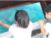 船の左右斜め下がガラス張りになっているボートに乗り、色とりどりの熱帯魚や珊瑚など海底ウォッチングを楽しもう!