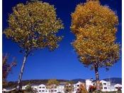 【秋】秋晴れの中の散策はおすすめ