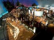 大迫力!恐竜博物館!