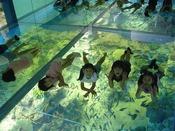 越前松島水族館へは、お車で約5分
