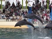 イルカやペンギンのショーも楽しめます。
