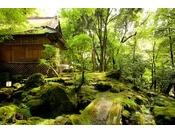 月日亭は、世界遺産『春日山原始林』の中にございまして、樹齢数百年の木々に囲まれた苔のむす環境で、川のせせらぎ、野鳥のさえずりなど、非日常の特別な時間をお過ごしいただけます。