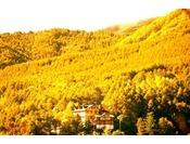 黄金色の紅葉の中の山岳ホテル