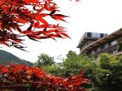 当館は山々に囲まれており、11月には各お部屋、大浴場から紅葉をお楽しみいただけます。