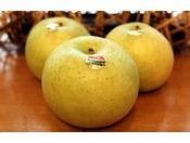 原川拓郎農園の梨は、甘くでジュシー。とれたて甘い果汁たっぷりです。木でじっくり熟したもぎたての梨は、旬ならではのお楽しみでございます。爽やかな酸味と食感は、暑さが残る初秋におすすめでございます