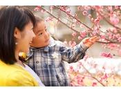 日本一早咲きで知られる熱海の梅の花をテーマにしたイベント「熱海、梅日和」を開催し