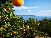 【周辺】温暖な熱海は年中フルーツが豊富