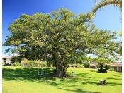 大きなガジュマルの木の下でブランコに乗りながらゆったりと寛げます。