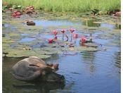 水牛池には水牛と鮮やかなスイレンの花が咲く
