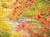 【秋の長流川】黄色や赤の紅葉が映える秋晴れの日。