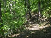 【散策コース】野鳥のさえずりや木々のざわめき。自然の音に耳を傾けてみてください。