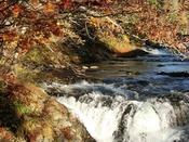 【秋の三階滝】紅葉のピークを過ぎ、川面に葉を落とす晩秋の三階滝。