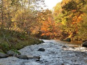 【秋の長流川】当館の目の前を流れる川と美しい紅葉。