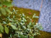 ◆お庭◆館内奥にございますお庭には、季節の花や木をそっと植えて、旅の想い出を彩ります