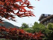 秋晴れの空に深紅の紅葉が輝く季節。2015年は11月中旬ごろからでした。