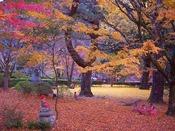 紅葉が美しい大寧寺(当館より車で6分)