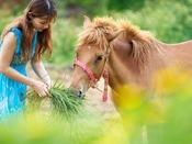 【乗馬体験】
