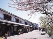 【倉敷美観地区】桜