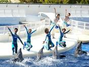 【京都水族館】大人気のイルカショー。