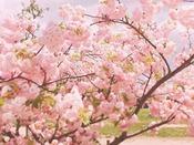 【梅小路公園】ホテルから徒歩約7分。季節の花と広い芝生、気持ちのいい公園です。