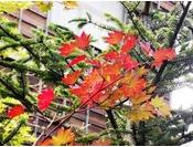 【外観】木の葉の秋。