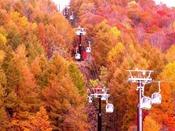 【秋】真っ赤に染まる山々を空から眺める贅沢
