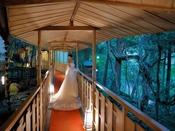 赤い絨毯が印象的な回廊。渡り廊下からは苔庭も望める