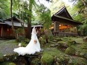 苔庭にドレスでフォトジェニックなショット