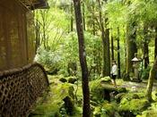 玄関脇のコケが美しいお庭