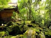 コケ庭の緑が美しく、情緒たっぷり