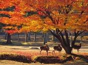 紅葉の奈良公園