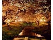 川面に桜と緑が情緒豊かに映える。川桁駅の北100mから約1kmにわたり、観音寺川両岸に約200本のソメイヨシノが植えられています。観音寺川は護岸工事のされていない小さな川で、満開の桜と土手の緑が川面に映える情緒あふれる光景を楽しめます。見頃:4月下旬