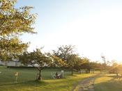 幻想的な雰囲気に包まれる園地