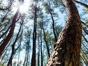 人の手で育まれた、自然の安らぎ。一ツ葉海岸「黒松林」