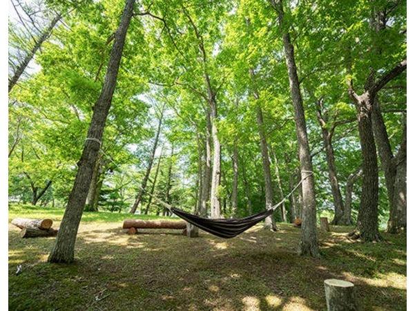 木もれびが心地よい森の中のハンモック