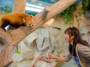 「那須どうぶつ王国」動物たちによるショーやパフォーマンスを毎日開催、アルパカにも会える(ホテルより車で約30分)