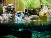 天然温泉の露天風呂~河童と混浴するのも、他ではできない上高地ルミエスタホテルの楽しみ。