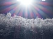 11月の晴れた朝には、梓川の周辺の樹々に霧氷が輝きます。