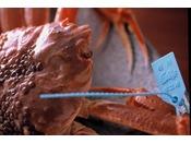 ~青タグ 活蟹~ 通常ものとは一線を画す、活ずわい蟹は一度食べてしまうとまた食べたくなってしまうほどです。殻に収まる身の詰まり方が違いますよね♪高価ですが一度はご賞味頂きたい活蟹です。