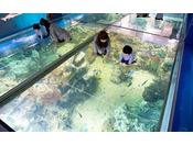 「越前松島水族館」