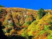 【秋・白山-白川郷ホワイトロード】白川郷から石川県を結ぶ、全長33.3kmの林道です(当ホテルから車で40分)